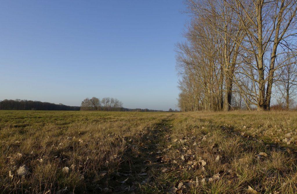 Wiesen und Baumreihe am Graben