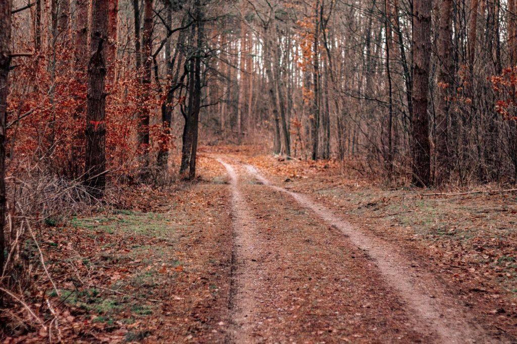 Weg durch den winterlichen Wald