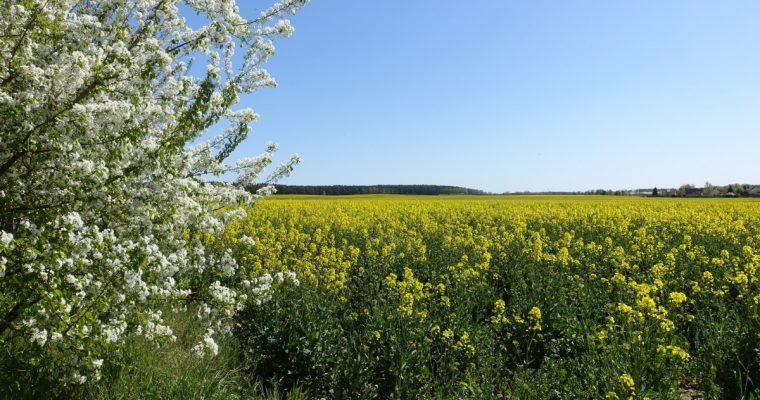 Wander-Touren für den Frühling