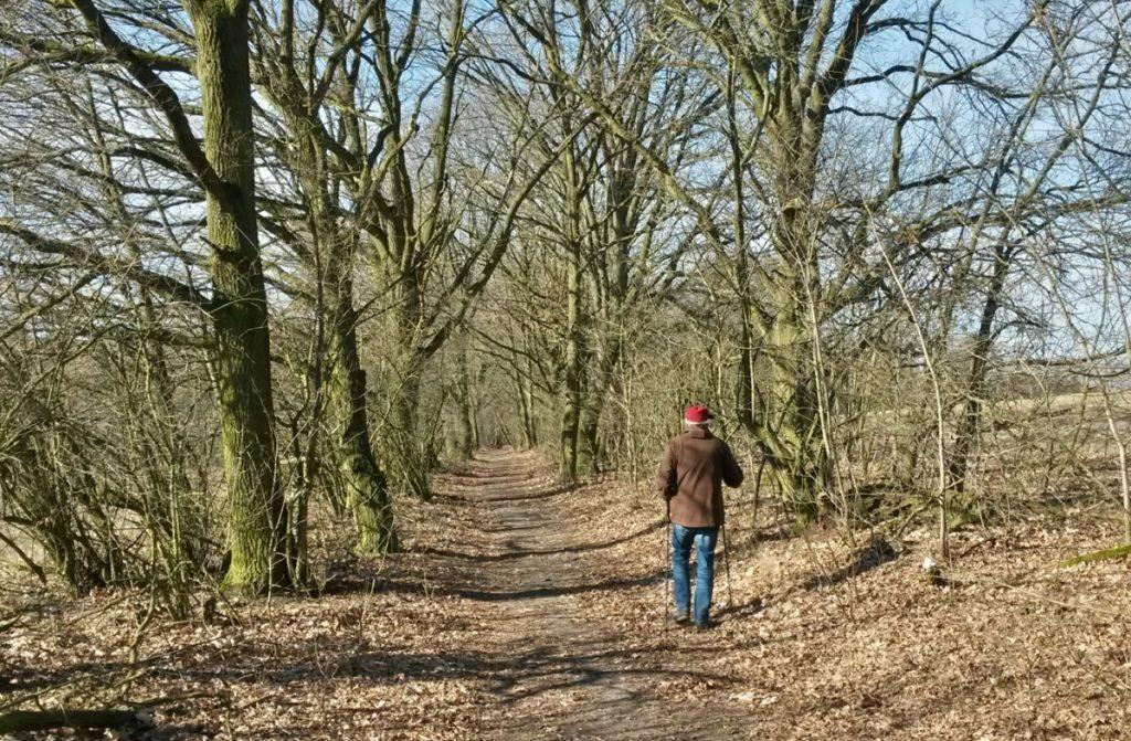 Ortolan-Wanderweg im Winter durch einen kahlen Feldgehölztunnel  mit einem Wanderer