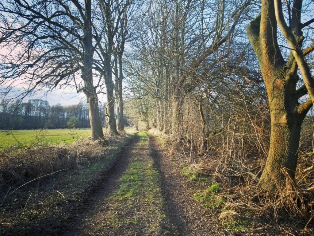 Feldweg zwischen Bäumen