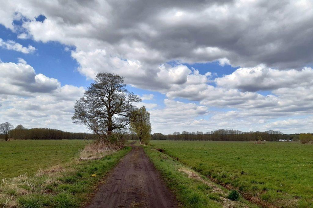 Feldweg in Wiesenlandschaft mit Graben und Feldgehölz